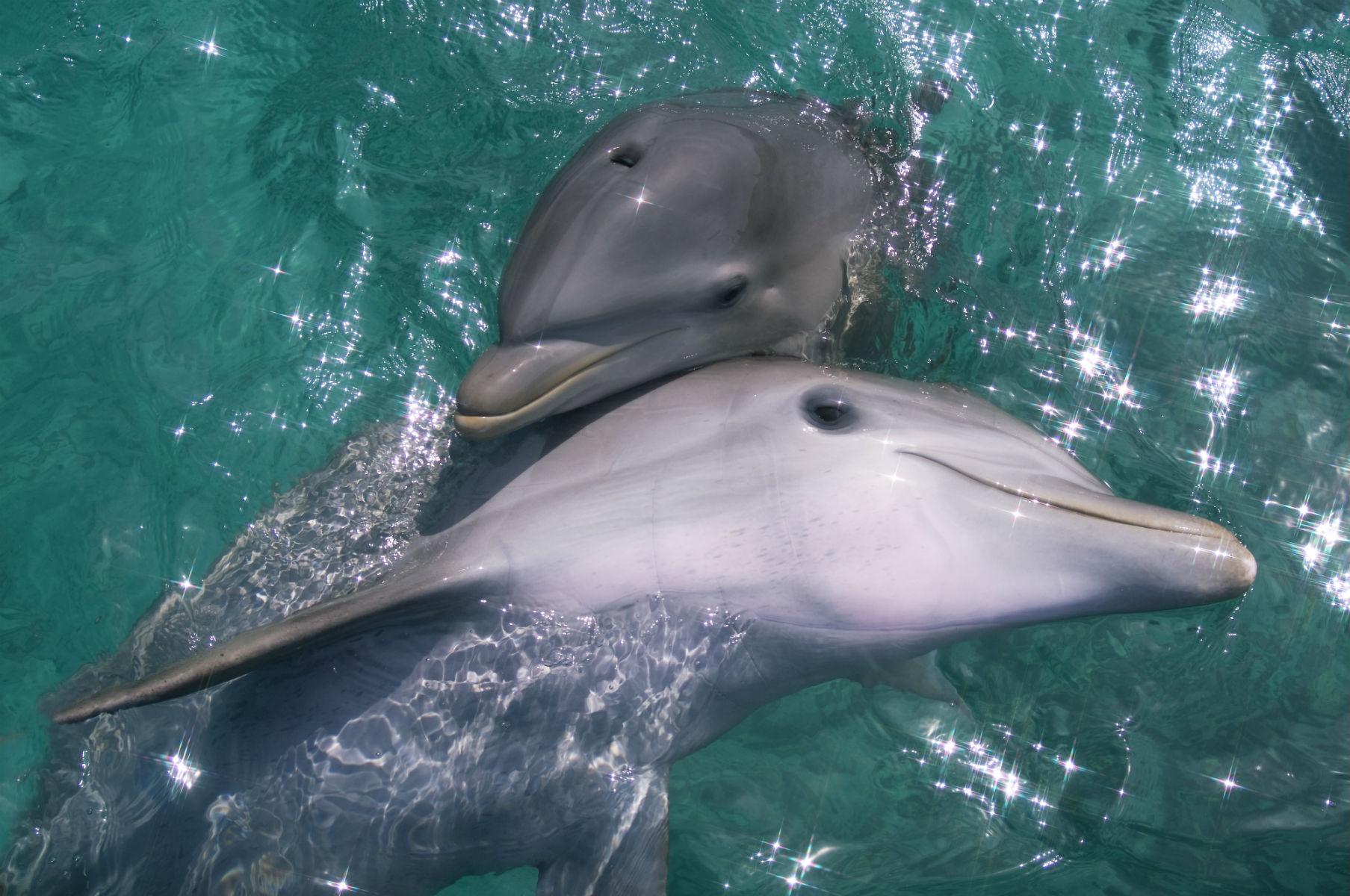 Delfiny iłabędzie wróciły doweneckich kanałów. Toefekt kwarantanny