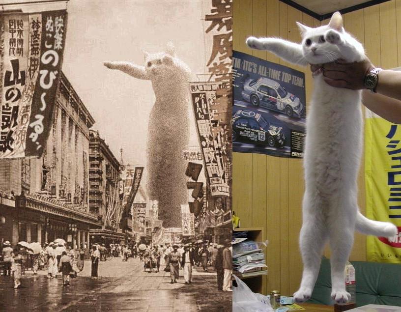 Nieżyje Longcat – bohaterka jednego zpierwszych kocich memów
